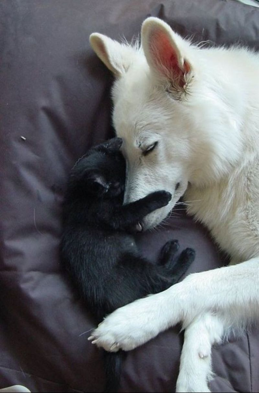 Blanc et Noir ... Noir et Blanc ... - Page 2 28c35b7d122a9196dc85088aa01a29d8