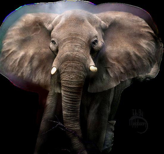 Elefanttube