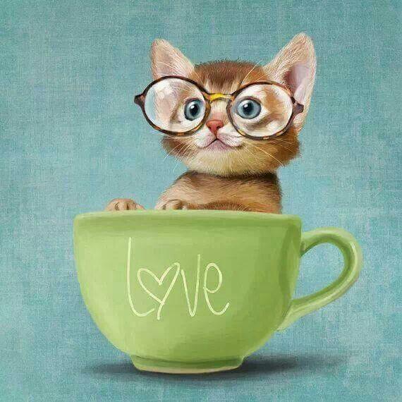 Tubes Gatos.... - Página 3 Chat-lunette-13092015
