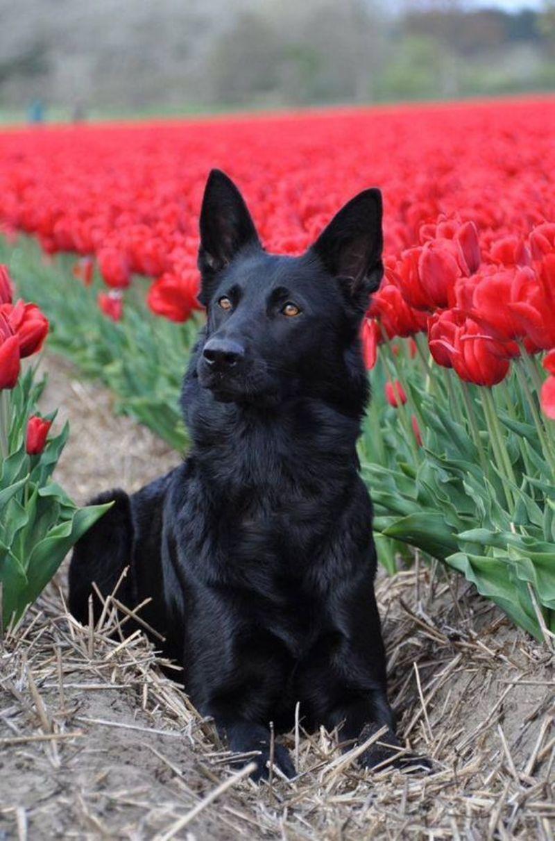 Ne pas couper les tulipes - Quand couper les tulipes fanees ...