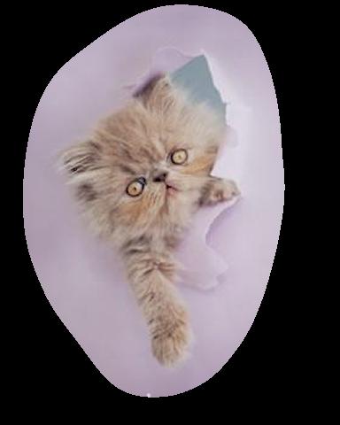 placelibertins chat  pour cent gratuit